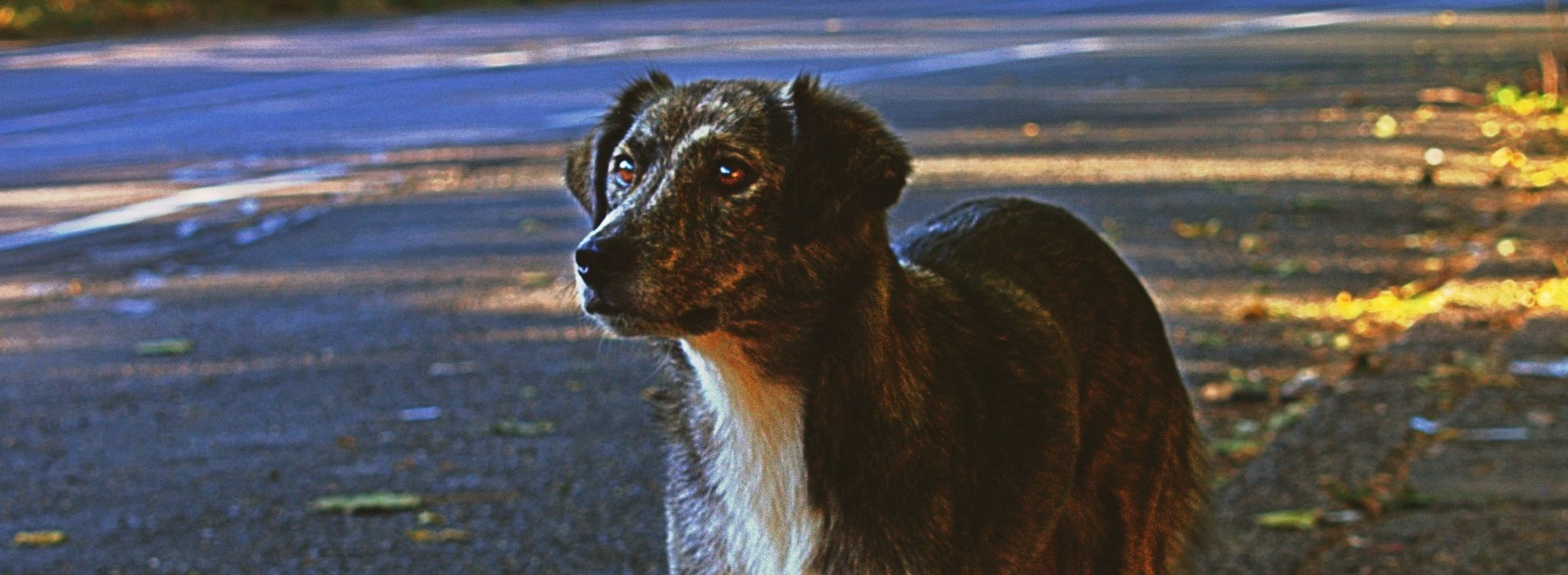 Dogs – stray, lost or found