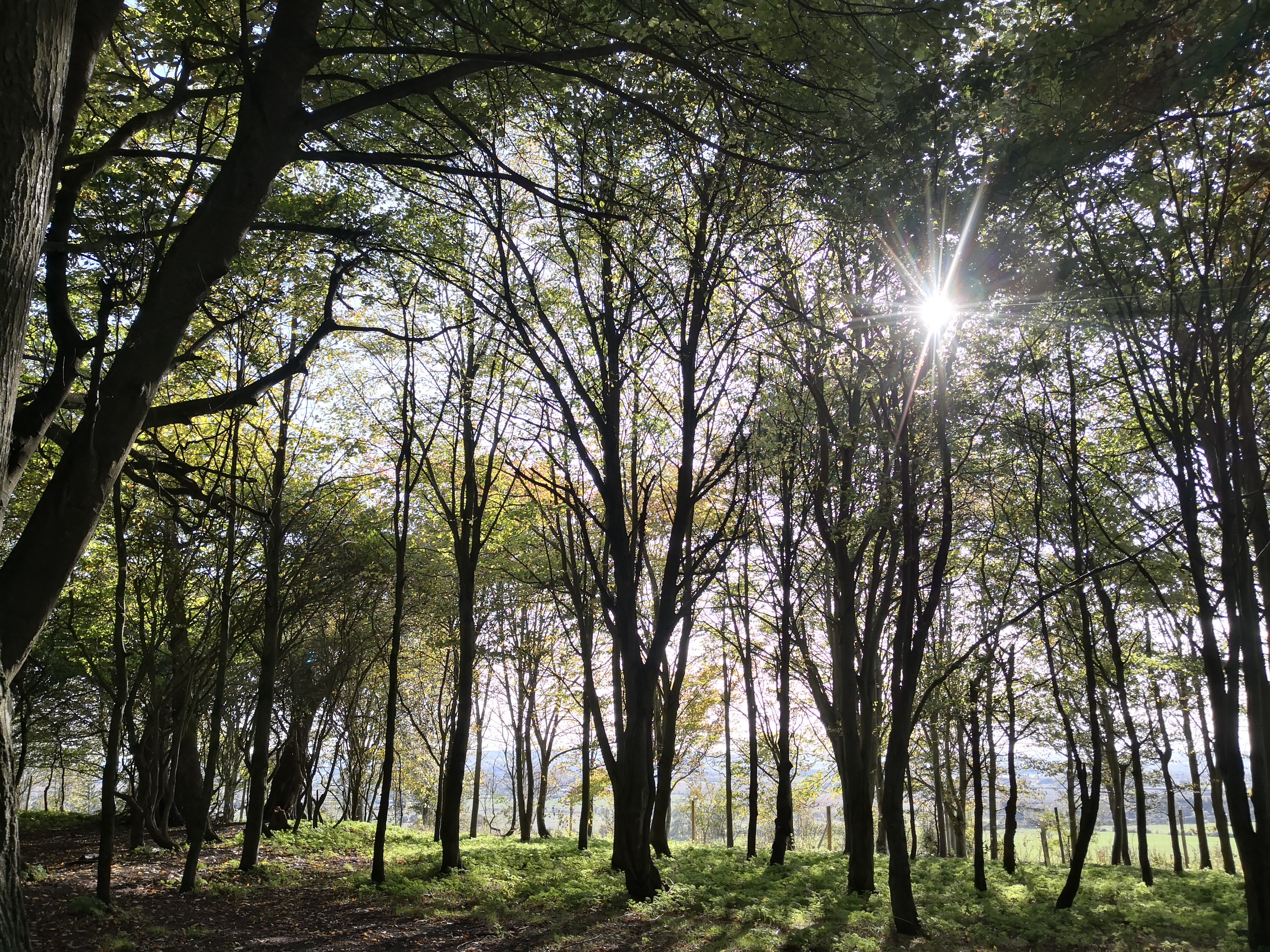 New Tree Champions embark on ecology and climate work for South Oxfordshire